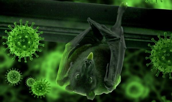 코로나19 바이러스의 중간 숙주로 거론되는 박쥐. [네이쳐]